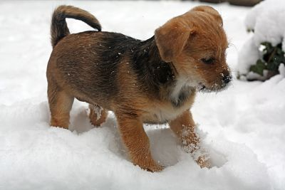 a little puppy in the snow